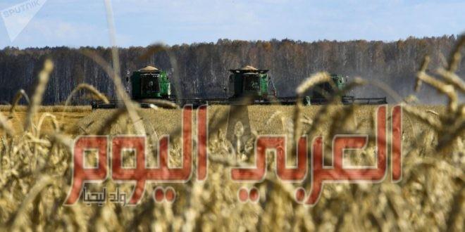 مصر تزرع ثلث المساحة المخصصة للقمح تقريبا منذ بداية العام