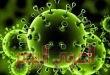 أربع وصايا من دار الإفتاء المصرية حول الوباء المنتشر حاليًا في العالم بما يسمى بفايروس كورونا