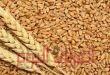 التموين تعلن عن اسعار توريد القمح المحلي