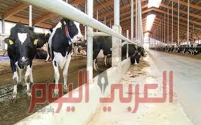 الزراعة: روسيا توافق على تسجيل عدد إضافي من شركات منتجات الألبان في مصر