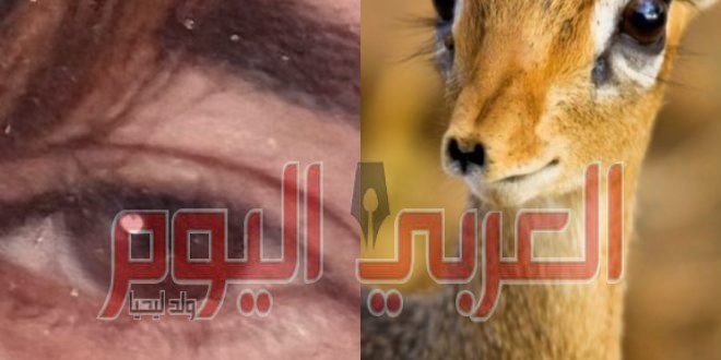 الجزٌارة الناعمة .. رواية مسلسلة للدكتورة : عزة العلوي (2) ..ورؤية تحليلية يكتبها: خالد جعفر